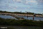 Shrimp farms in Sulawesi (Sulawesi - Celebes)