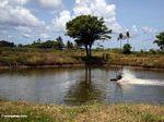 Shrimp pond with aeration device (Sulawesi - Celebes)