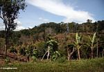 Converting forest for agriculture in Sulawesi (Sulawesi - Celebes)