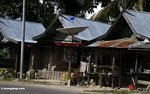 Satellite dish in a village (Sulawesi - Celebes)