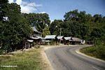 Roadside stalls (Sulawesi - Celebes)