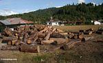 Cut wood (Sulawesi - Celebes)