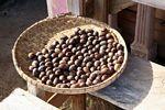 Cacao seeds (Toraja Land (Torajaland), Sulawesi)