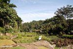 Lemo village (Toraja Land (Torajaland), Sulawesi)
