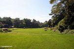 Rice fields at Lemo (Toraja Land (Torajaland), Sulawesi) -- sulawesi6664