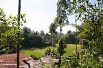 Rice fields at Lemo (Toraja Land (Torajaland), Sulawesi) -- sulawesi6698