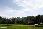 Rice fields at Lemo (Toraja Land (Torajaland), Sulawesi) -- sulawesi6701