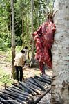 Pig entrails--preparing for a traditional Torajan funeral (Toraja Land (Torajaland), Sulawesi)