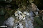 Human skulls in cave at Londa Nanggala (Toraja Land (Torajaland), Sulawesi) -- sulawesi6824