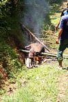 Roasting a pig over an open fire (Toraja Land (Torajaland), Sulawesi)