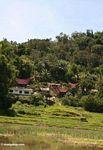 Red-roofed Tongkonan houses (Toraja Land (Torajaland), Sulawesi)