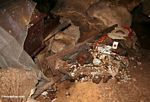 Broken coffin in cave at Londa Nanggala, with contents on floor of cave (Toraja Land (Torajaland), Sulawesi)