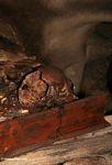 Skull in cave at Londa Nanggala (Toraja Land (Torajaland), Sulawesi)