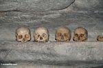 Human skulls in cave at Londa Nanggala (Toraja Land (Torajaland), Sulawesi)