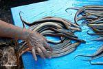 Picking the right eeel at the fish market in Rantepao (Toraja Land (Torajaland), Sulawesi)