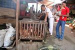 Live roosters for sale at market in Rantepao (Toraja Land (Torajaland), Sulawesi)