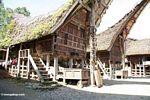 Palawa village houses (Toraja Land (Torajaland), Sulawesi)