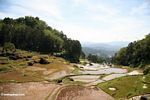 Tiered rice fields of Batutomonga (Toraja Land (Torajaland), Sulawesi)