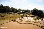 Terraced rice fields of Batutomonga (Toraja Land (Torajaland), Sulawesi) -- sulawesi7148