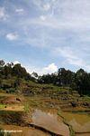 Terraced rice fields of Batutomonga (Toraja Land (Torajaland), Sulawesi)