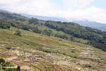 Tiered rice paddies of Batutomonga (Toraja Land (Torajaland), Sulawesi)