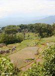 Green rice paddies of Batutomonga (Toraja Land (Torajaland), Sulawesi)