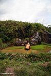 Woman working in muddy rice field (Toraja Land (Torajaland), Sulawesi)