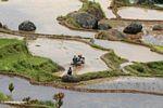 Men tilling rice field (Toraja Land (Torajaland), Sulawesi)