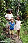 Children in Tikala (Toraja Land (Torajaland), Sulawesi) -- sulawesi7327