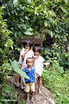 Children in Tikala (Toraja Land (Torajaland), Sulawesi) -- sulawesi7334