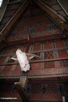 Intricately carved wood on side of Toraja house in Ketu Kese (Toraja Land (Torajaland), Sulawesi)