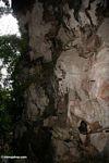 Coffins on scaffolding along cliff (Toraja Land (Torajaland), Sulawesi)