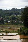 Rice fields (Toraja Land (Torajaland), Sulawesi) -- sulawesi7454