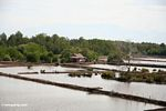 Mangrove forest cleared for settlement and shrimp farms (Sulawesi - Celebes)