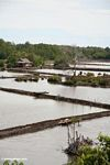 Mangrove forest cleared for settlement and aquaculture (Sulawesi - Celebes)