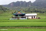 Colorful house among green rice paddies (Sulawesi - Celebes)