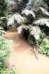 Whitewater creek (Sulawesi - Celebes)