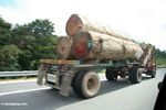 Logging truck transporting rainforest timber