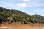 Tropical rain forest along the Tembeling River