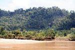 Oil palm plantation displacing natural jungle in Malaysia