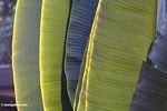 Sun highlighted palm leaves