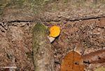 Bright orange mushroom
