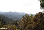 View from lookout point at Taman Negara