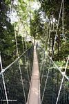 Canopy walkway at Taman Negara