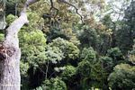 Rainforest as viewed from the canopy