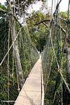 Malaysian canopy walk