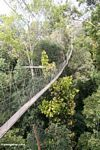 Rain forest canopy walkway at Taman Negara