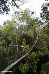 Rainforest canopy walkway at Taman Negara