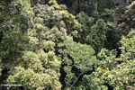 Treetops in the rainforest canopy