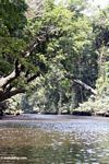 Tree-covered Tahan River